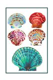 Seashell Collection I