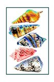 Seashell Collection II
