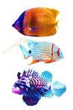 Fish Trio