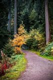 Black Forest Path III