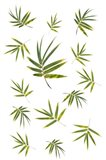 Bamboo Leaf Collection