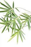 Bamboo Bouquet