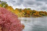 Snake River Autumn IV
