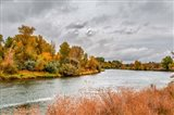 Snake River Autumn V