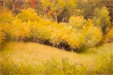 Fall Thicket