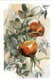 Peaches III