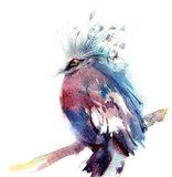 Ruffled Feathers II