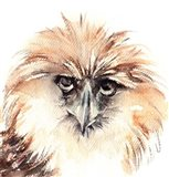 Ruffled Feathers IV