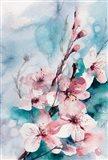 Aqua Blossoms