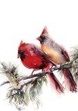 Cardinals IV