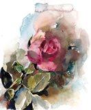 Single Rose