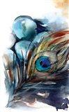 Peacock III