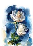Indigo Roses