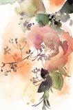 Rosy Rose IV