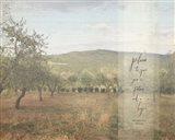 Jeremiah Olive Grove II