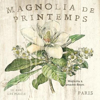Magnolia de Printemps Poster by Sue Schlabach for $50.00 CAD