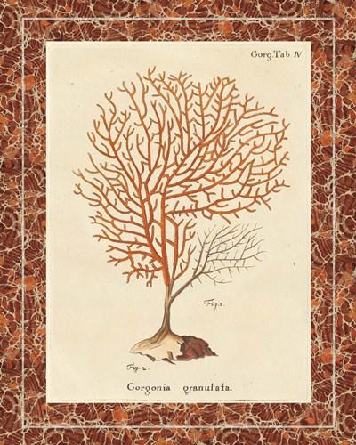 Gorgonia Granulata Marble Poster by Wild Apple Portfolio for $220.00 CAD