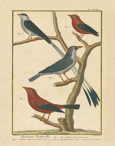 Bird Drawing III Poster by Wild Apple Portfolio for $57.50 CAD