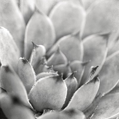 Garden Succulent I Poster by Laura Marshall for $35.00 CAD