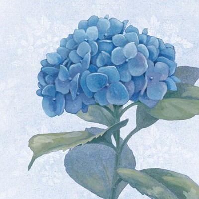 Blue Hydrangea IV Crop Poster by Beth Grove for $35.00 CAD