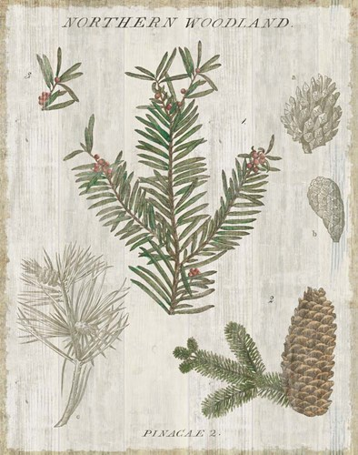 Woodland Chart II Poster by Sue Schlabach for $66.25 CAD