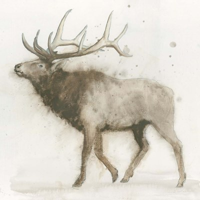 Elk Poster by James Wiens for $57.50 CAD