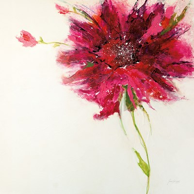 Pink Daisy on White Poster by Jan Griggs for $57.50 CAD