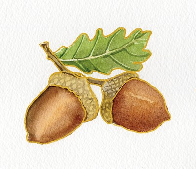 Autumn Days Acorns Poster by Kathleen Parr McKenna for $32.50 CAD