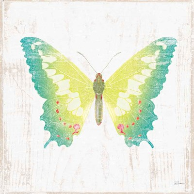White Barn Butterflies III Poster by Sue Schlabach for $35.00 CAD