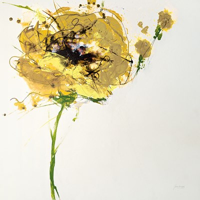 Yellow Poppy Master on White Poster by Jan Griggs for $50.00 CAD