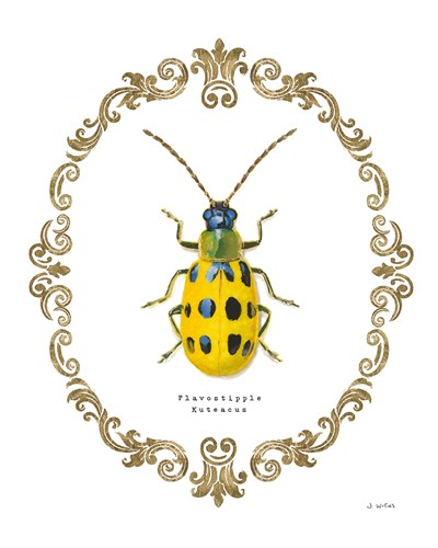 Adorning Coleoptera VII Poster by James Wiens for $57.50 CAD