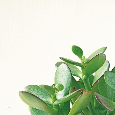 Succulent Simplicity IV Neutral Poster by Felicity Bradley for $42.50 CAD