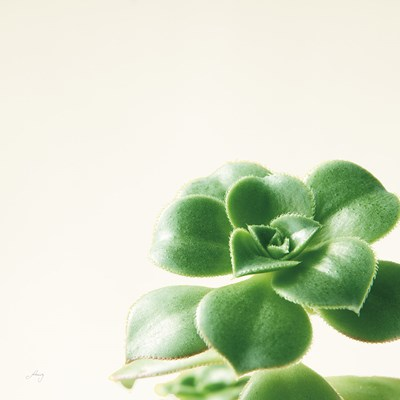Succulent Simplicity VIII Neutral Poster by Felicity Bradley for $42.50 CAD