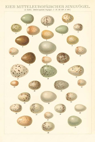 Songbird Egg Chart Poster by Wild Apple Portfolio for $45.00 CAD