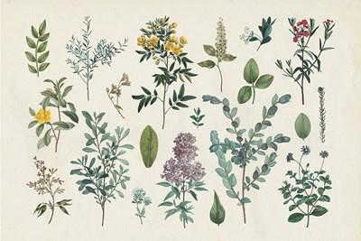 Victorian Garden IV Poster by Wild Apple Portfolio for $45.00 CAD