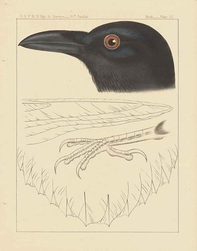 Bird Prints II Poster by Wild Apple Portfolio for $85.00 CAD
