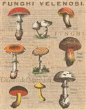 Funghi Velenosi I