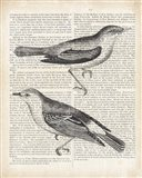 Vintage Birds on Newsprint