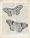Vintage Butterflies on Newsprint