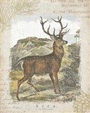 Woodland Stag I