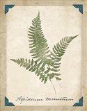 Vintage Ferns X