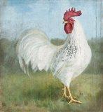 Noble Rooster I Vintage No Border