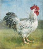 Noble Rooster IV v.2 Vintage No Border