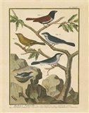Bird Drawing IV