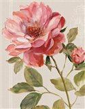 Harmonious Rose Linen
