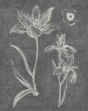 Eden Spring II Gray