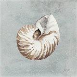 Sand and Seashells I