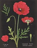 Poppy Chart