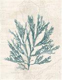 Pacific Sea Mosses I Borderless