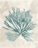 Pacific Sea Mosses II borderless